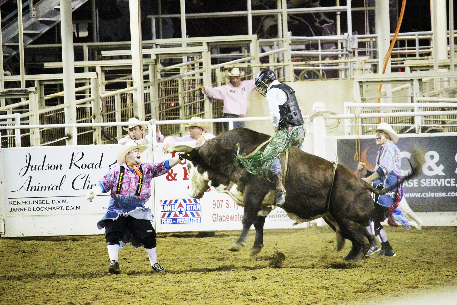 Bull fighter & bull ride